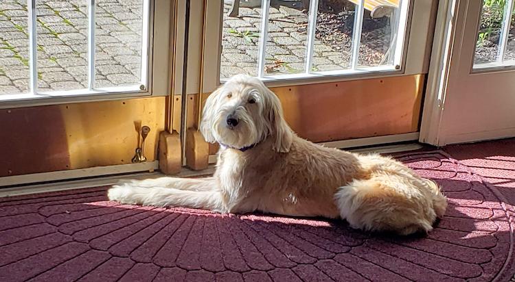Rocky Sunbathing